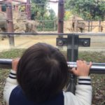 子連れで上野動物園へ行ってきた!週末の混雑状況やランチレポ