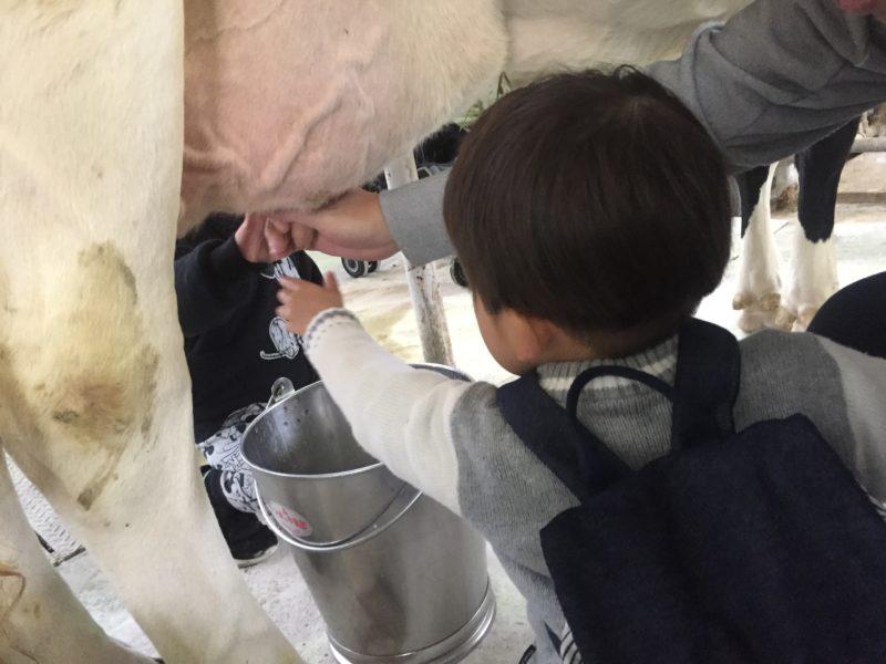 マザー牧場の乳しぼり体験