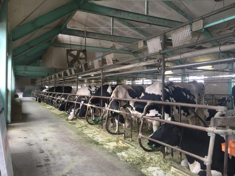 マザー牧場の牛舎小屋
