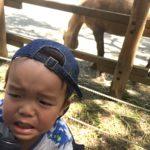 多摩動物公園に2歳の子供連れで行ってきた!ランチやおすすめルート