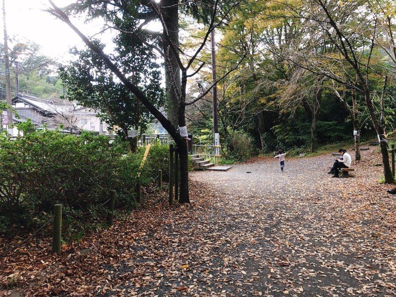 高尾山の落ち葉