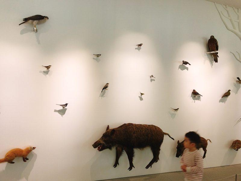 高尾599ミュージアムの動物の展示