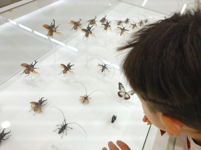 高尾599ミュージアムの虫